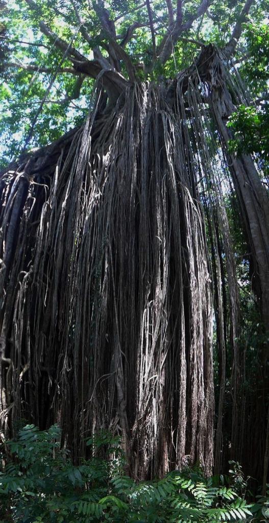 Baum an Baum