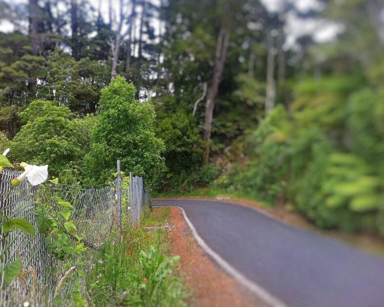 So stelle ich mir das schon eher vor. Verschlungene Straßen im Wald und ein paar schöne Blumen zieren den Wegrand. Das bekommt ein hübsch!