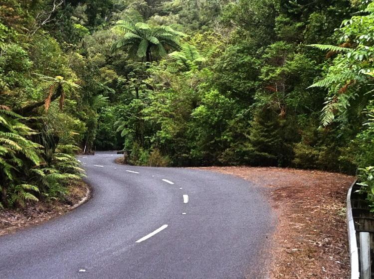 Der Kauri Forest ist vielleicht der letzte Wald Neu Seelands. Ein Gemisch aus Regenwald und Sonstigen.