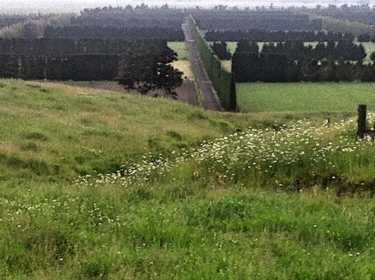 Wenn man keine Wälder mehr zur Verfügung hat pflanzt man sich einen Windschutz.