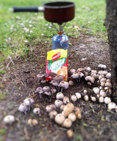 Lecker Pilze zum Mittag. Kann man eigentlich das Gift aus Pilzen raus kochen?
