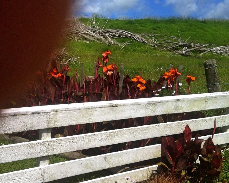 Keine Wildblumen aber trotzdem schön. Wenn da nicht der Bockwurstfinger im Weg wäre. Ich muss noch etwas üben mit den Kommunikationsklumpen.