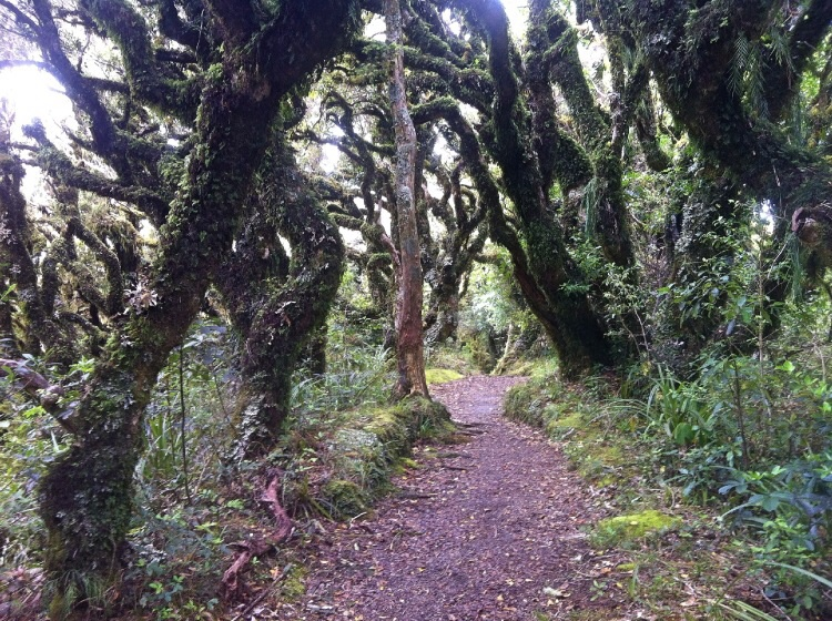 Am Taranaki gibt es noch etwas von dem alten Wald der mal ganz Neuseeland bedeckte.
