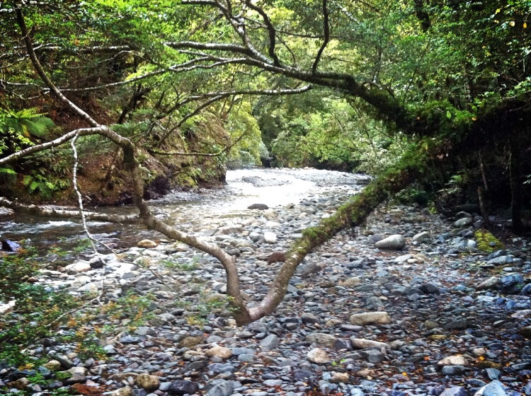 Eins muss man Neuseeland schon lassen. Die Flüsse Haben alle eine andere Farbe.