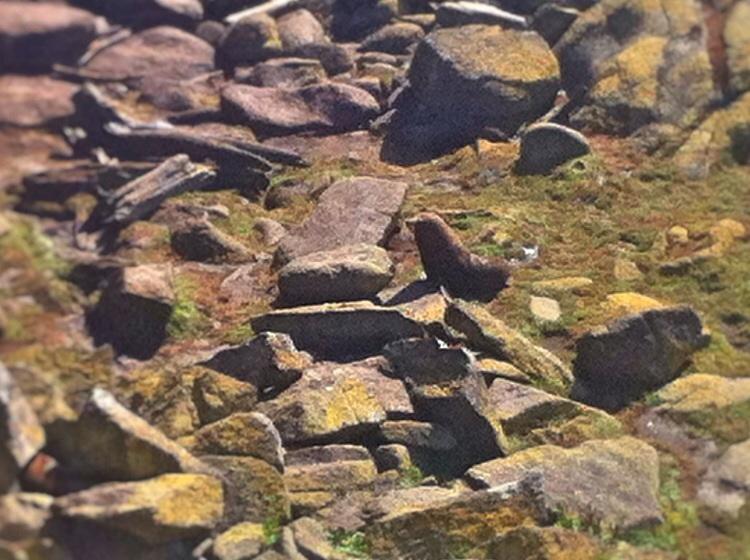 Irgend wo in dem Steinhaufen sind Robben versteckt. Man sieht ganz klar das diese Tiere nicht für den Landgang konzipiert wurden!
