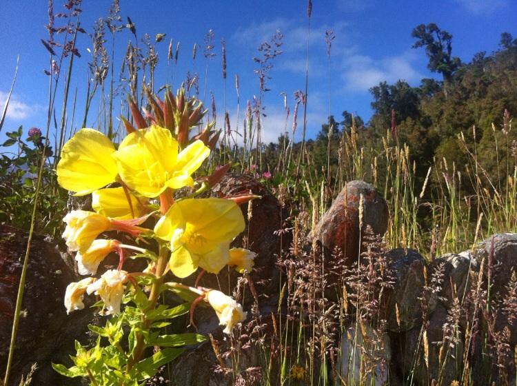 Trail Blume!