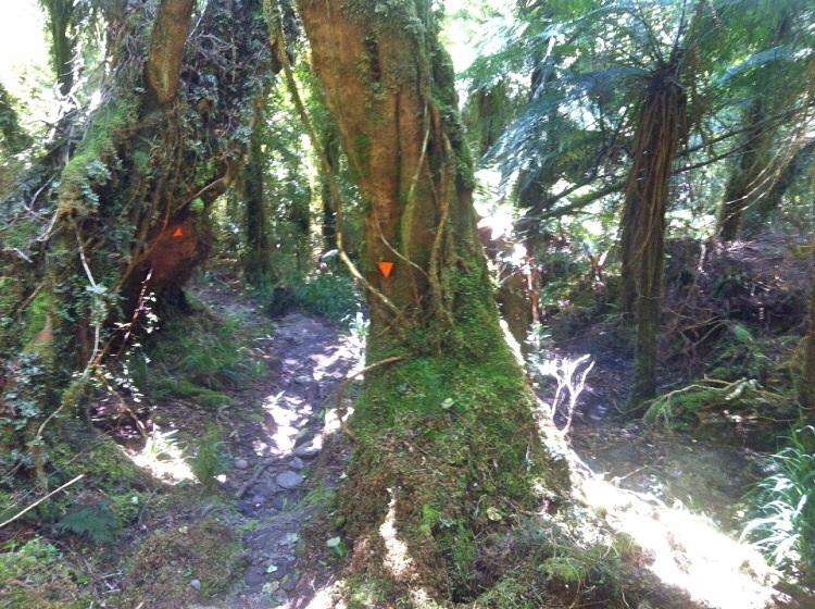 Der Anfang der Wanderung führt durch den Busch.